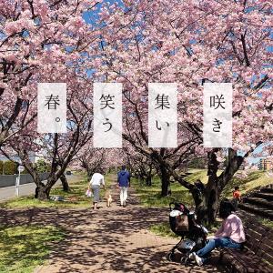 咲き集い笑う春